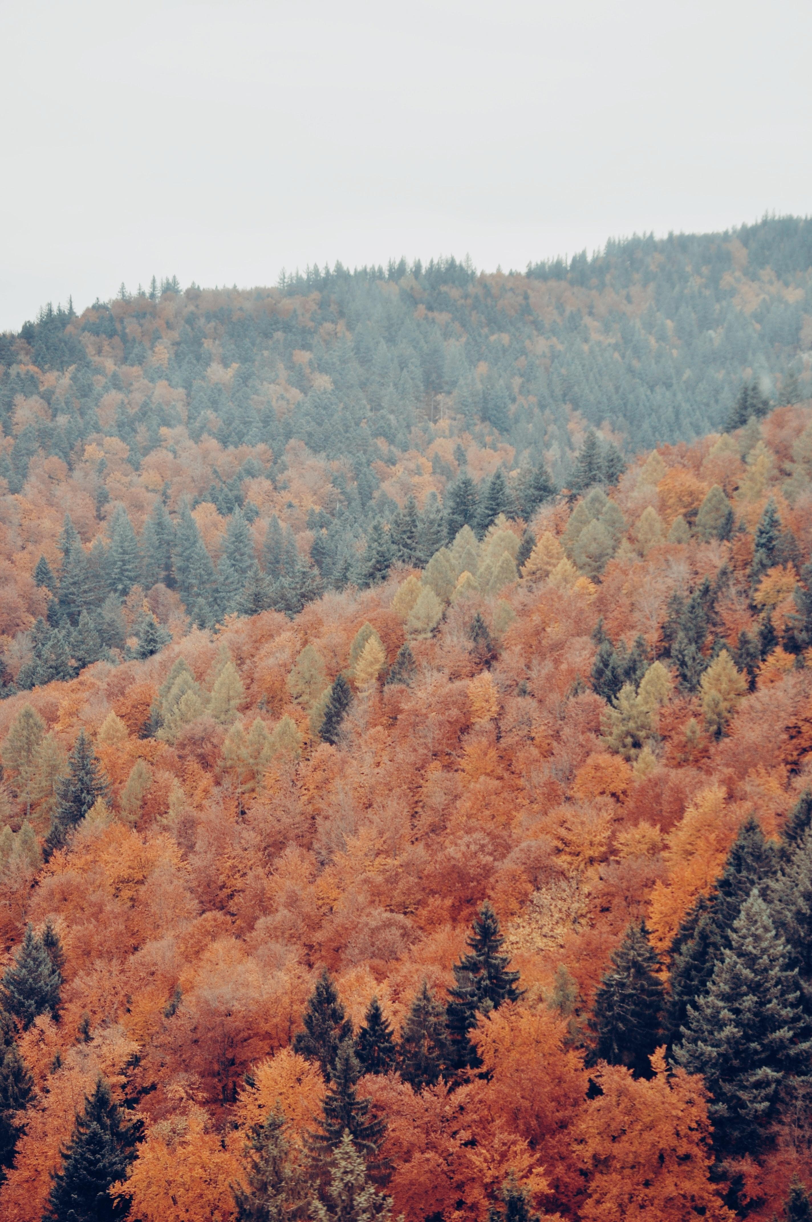 Tree Leaf Talk: A Heideggerian Anthropology
